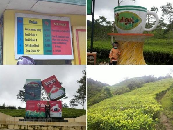 cakpoercom - harga tiket karcis kebun teh kaligua