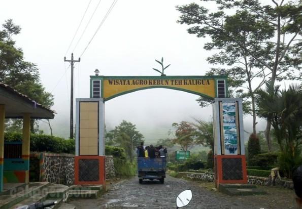 cakpoercom - pintu masuk wisata kebun teh kaligua